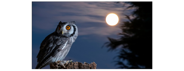 Are You a Night Owl Adrenal Fatigue Leaky gut Thyroid Jenn Malecha